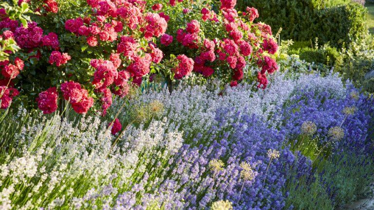 Claire Merriman Design - Plant Sourcing and Design - 22